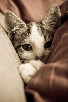 I love cats! Crazy Cat Lady, Crazy Cats, I Love Cats, Cute Cats, Funny Cats, Pretty Cats, Beautiful Cats, Animals Beautiful, Pretty Kitty