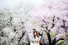 東京での桜エンゲージメントフォト   ウェディングフォトブログ by kuppography