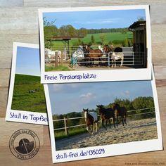 Im Offenstall in Topfseifersdorf sind Plätze frei. Erfahr hier mehr über den Pensionsstall 👉🏻 www.stall-frei.de/135029 #stallfrei #Stallverzeichnis #Boxenverzeichnis #Weideverzeichnis #Offesntall #Raufutter #Weide #Heu #Paddock #See #Westernreiten #reiten #Hafer #Bewegungshalle #Reitplatz #Hängerstellplatz #Pferde Stall Frei, Baseball Cards, Western Horse Riding, Dog Playpen, Hay