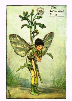 "Cicely Barker's Fairy Print - ""THE GROUNDSEL FAIRY"" - Children's Lithogrpah - c1935"