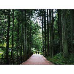 【intothegarbage】さんのInstagramをピンしています。 《. #石見銀山 #島根 #山 #森 #木 #緑 #世界遺産 #散策 #東京カメラ部 #奥行き同盟 #スナップ #スナップショット #photooftheday #instagood #discoverjapan #shimane #ig_japan #icu_japan #RECO_ig #team_jp_西 #alley #mountains #forest #tree #treestagram #green #worldheritage #depth #tokyocameraclub #IGersJP》