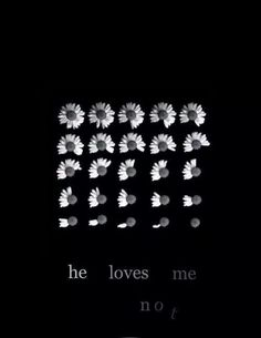 he loves me not (tumblr , daisies , flowers , transparents , overlays , one and only , lovehim)