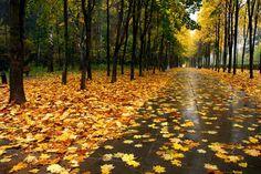 осень , дождь