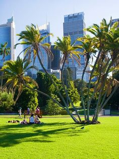 Royal Botanic Garden, Sydney, New South Wales, Australia Perth, Brisbane, Melbourne, Australia Living, Australia Travel, Tasmania, Royal Botanic Gardens Sydney, Visit Sydney, Sydney Trip