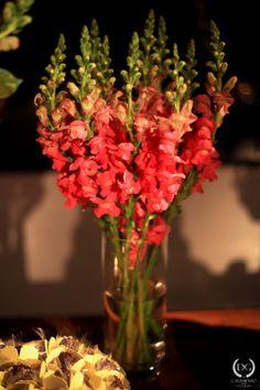 casamento dg guia noiva decoracao rosa orquidea dg (66)