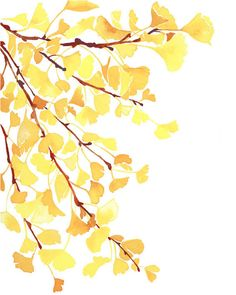 Print- Yellow Gingko Leaves — Yao Cheng Design