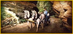Carriage tour in canyon! WI $10 Visitors ride through a mile of cliff-walled gorges in comfortable yet quaint horse-drawn carriages. At the narrowest passages, the guides must talk the horses through the tight squeeze. In some of the deeper parts, the sheer rock and sandstone wall have not felt the touch of the sun in more than 50,000 years.