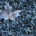 how to garden with frost... temps need to be converted to celcius but still helpful