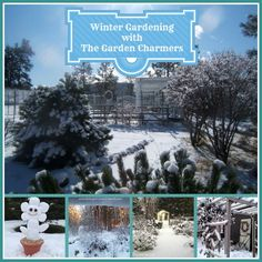 winter gardening http://ourfairfieldhomeandgarden.com/winter-gardening-with-the-garden-charmers/