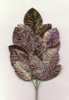 In love with velvet leaves and flowers