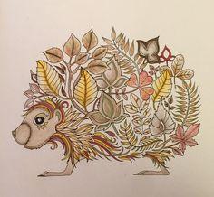 Hedgehog - Enchanted Forest