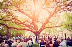Texas Oak tress + Texas outdoor weddings