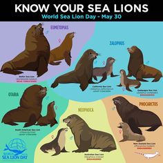 beautiful animal art Anime Style is part of Underrated Anime With Beautiful Art Styles Goboiano Com - Know Your Sea Lions Fun Facts About Animals, Animal Facts, Rare Animals, Animals And Pets, Animal Species, Marine Biology, Animals Of The World, Animals Beautiful, Pet Birds