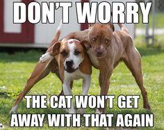 Won't Happen Again | Funny Pictures!