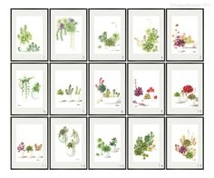 i REALLY like these!!!! succulent prints