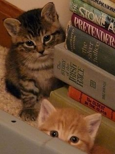 Cats & books