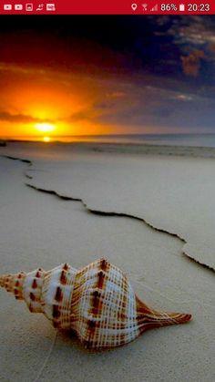 Deities, Creative Photography, Mother Earth, Sea Shells, Seaside, Egypt, Sunrise, World, Beach