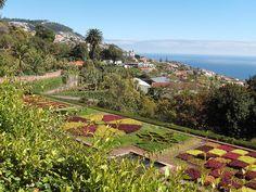 botanical gardens, funchal, madeira Famous Gardens, Funchal, Secret Gardens, Paragliding, Beach Pool, Island Life, Botanical Gardens, Landscape Design, Sailing