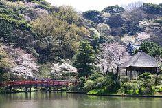 http://www.japan-guide.com/blog/g/sakura_090403_yokohama_06.jpg