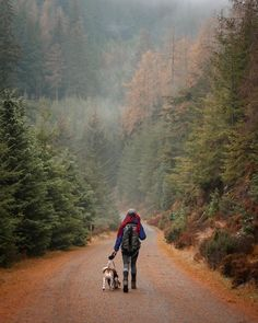 Leading the way with her dog Rango, Hannah Cooke takes us to Cumbria's Whinlatter Forest, England's only mountain forest.