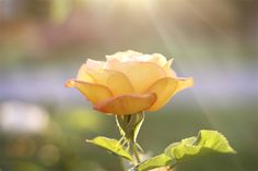 Great flower photography tips.