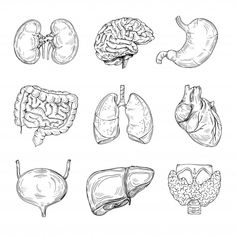 Hand drawn brain, heart and kidneys, stomach and bladder. Intestine organ of collection, internal digestive Music Drawings, Drawing Sketches, Art Drawings, Human Anatomy Art, Anatomy Drawing, Brain Drawing, Brain Art, Arte Com Grey's Anatomy, Medical Anatomy