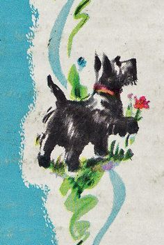 Scottish terrier / Scotty dog picks a flower art illustration.