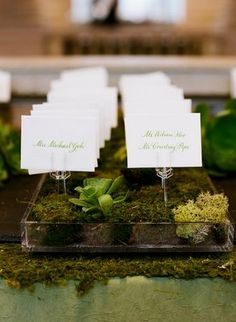 forest theme name cards