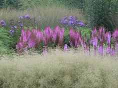 Deschampsia cespitosa 'Goldtau' and Liatris Spicata in one of the display gardens at Northwind Perennial Farm. Photo by Roy Diblik.