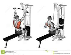 Exercising. Reverse Grip Lat Pulldown Stock Illustration - Image: 68612577