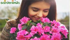 Gardenesia introduces the wide variety of imported winter bulbs