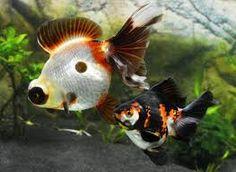 Resultado de imagen para pinterest peces de colores