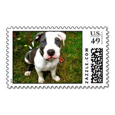 Adorable Pit Bull Puppy Stamps ReviewOnline Secure Check out Quick and Easy...
