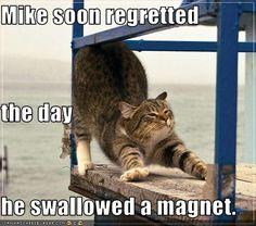 Bump hahahahahaha      Google Afbeeldingen resultaat voor http://icanhascheezburger.wordpress.com/files/2009/05/funny-pictures-cat-regrets-swallowing-a-magnet.jpg