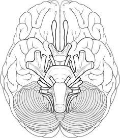 Brain coloring page school pinterest brain human body and human brain cranial nerves coloring sketch coloring page ccuart Image collections