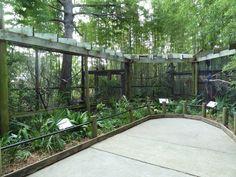 bird aviary - Google Search