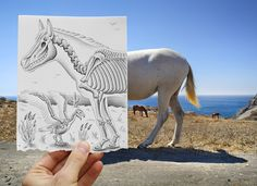 pencil vs camera white horse