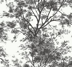 York Wallcoverings YV9012 Black and White Circle Wallpaper Warm White / Black Home Decor Wallpaper Wallpaper