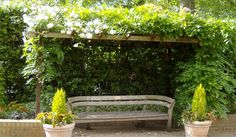 Pergola Plants Guide: Shade and Enhance Your Outdoor Space