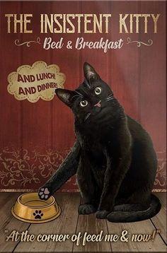 Funny Cats, Funny Animals, Cute Animals, Cat Lover Gifts, Cat Gifts, Crazy Cat Lady, Crazy Cats, Cat Posters, Tier Fotos