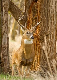 The Big Buck