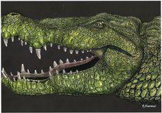 Alligator by Christy H.