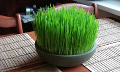 Wheatgrass (pasto de trigo), sus maravillosos beneficios