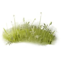 emeto_summer playground_grass overlay 3.png ❤ liked on Polyvore featuring grass, plants, fillers, flowers and backgrounds