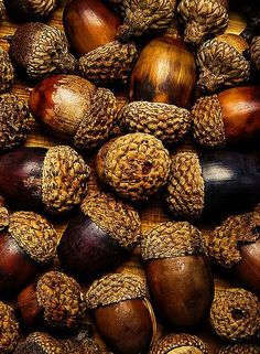 The colours and the smell of acorns...