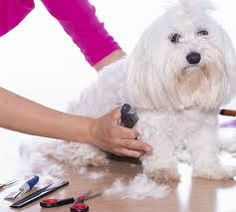 If your dog has any mats or tangles it may be a good idea to give them a nice brush and trim off mats/knots before bath time. Water. Washcloth. Cotton Balls. Shampoo. Massage. Rinse. Conditioner. Dog Grooming Clippers, Dog Cleaning, Bath Time, Dog Training, Your Dog, Knots, Balls, Massage, Shampoo