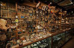 The wunderkammer through history: 1993 The Evolution Store, NY