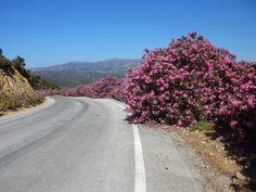 Nerier så som autoværn på Kreta
