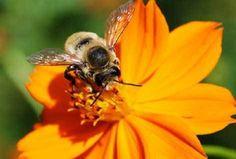 Miele: produzione crollata del 70. Le api muoiono per clima e pesticidi - Cronaca - La Nuova di Venezia