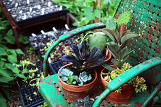 succulents and a chippy chair